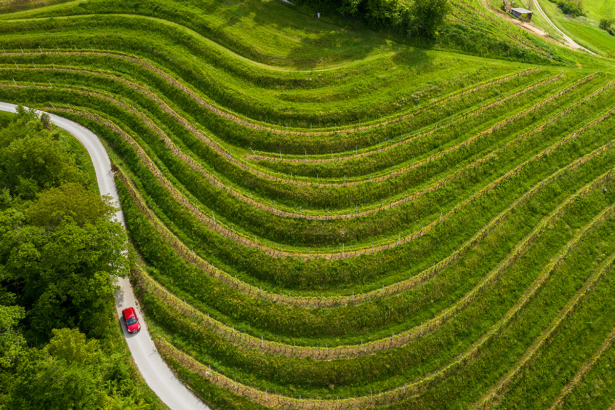 00047 vinogradi samec ozmec_maro-wine-vineyard_slovenia